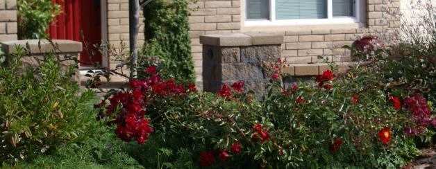 Lawn-Less Entry by Albright-Souza Garden Design