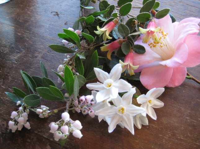 Correa and Arctostaphylos with Camellia and Narcissus