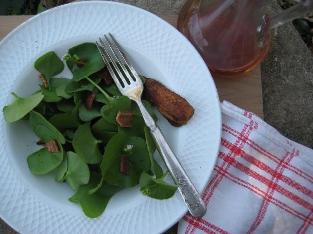 Albright-Souza Miner's Lettuce Salad