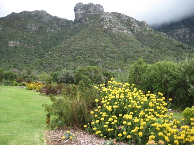 AlbrightSouza African Plants in Kirstenbosch Botanical Garden