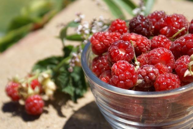AlbrightSouza Raspberries 7065