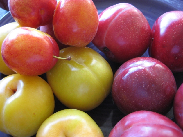 Albright-Souza Plums assorted