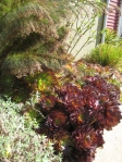 Albrightsouza_succulents