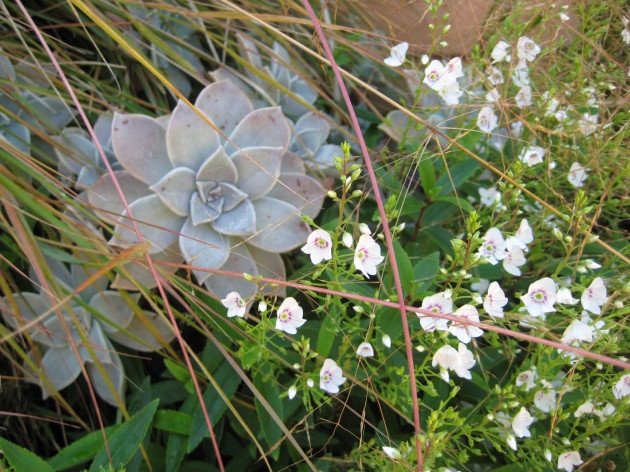 Albright-Souza Succulent Style Mix with Grass