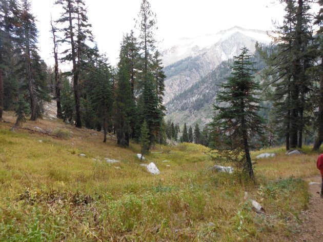 Mineral King Meadow