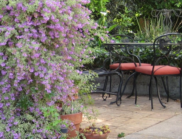 prostanthera with table