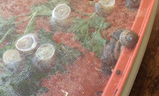 snails waiting