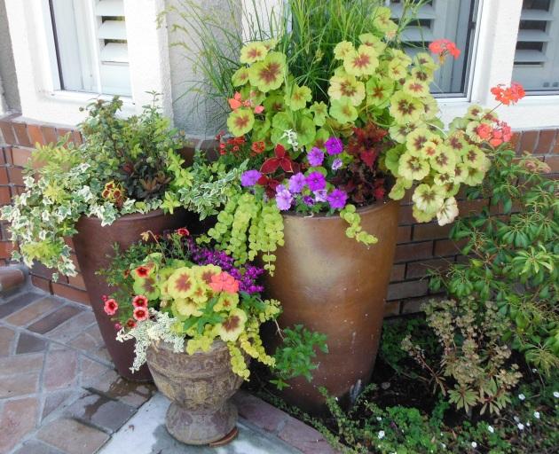 Albright-Souza pot group color mix
