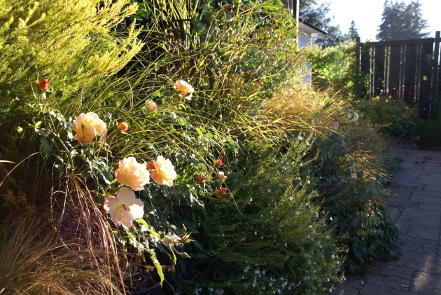 Late Summer Garden with Roses