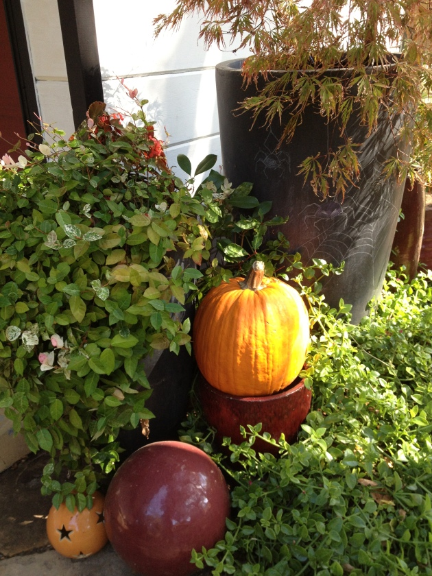 Pumpkins and Maples