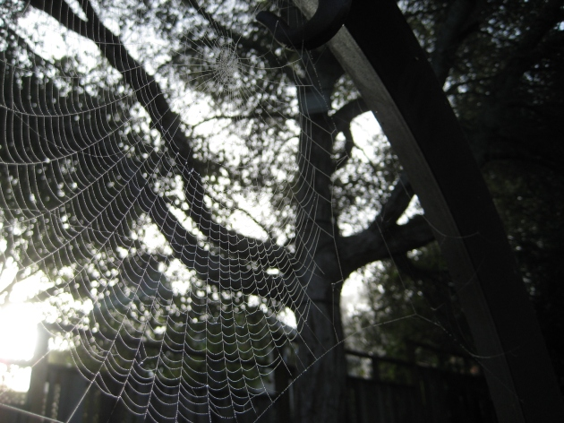 spider web with oak