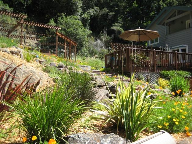 deer fence for water-wise garden