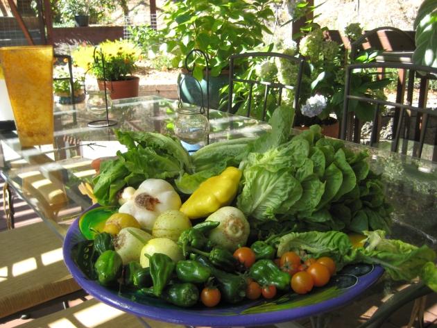 harvest from fenced garden