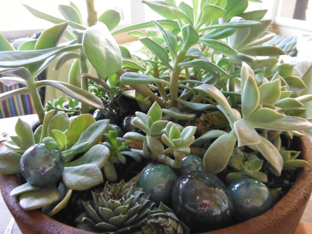 succulents with pebbles