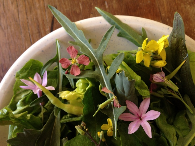 edible flower salad with mustard and radish