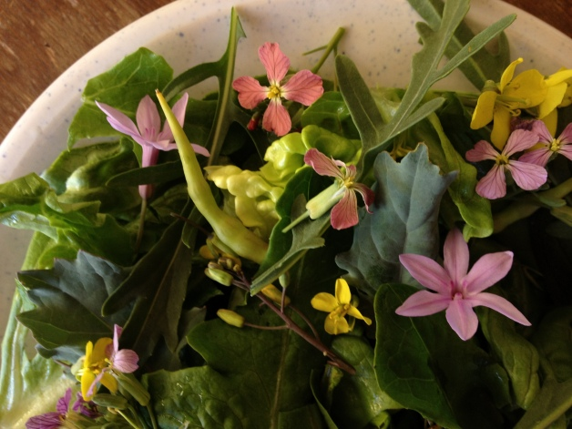 edible flower salad with radish pods and tulbaghia