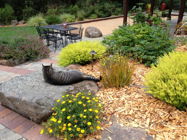 cat relaxes on garden boulder