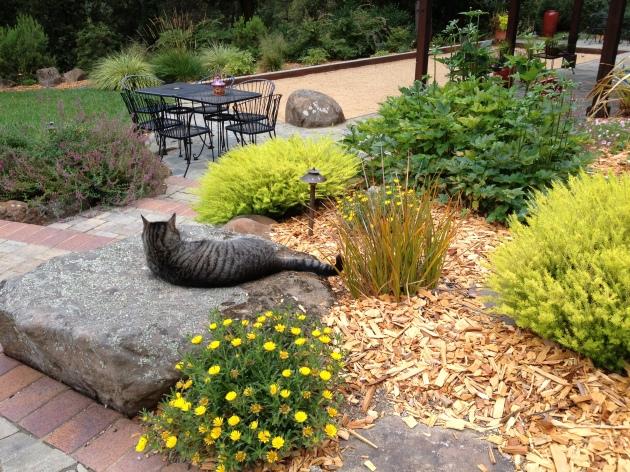 cat relaxes on garden boulder