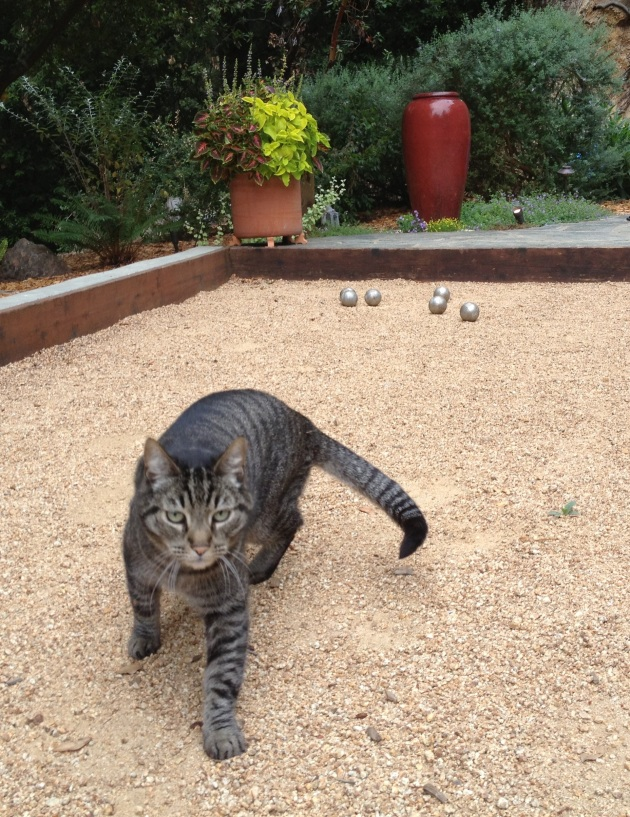 cat at play with bolles
