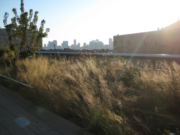 High Line grass views