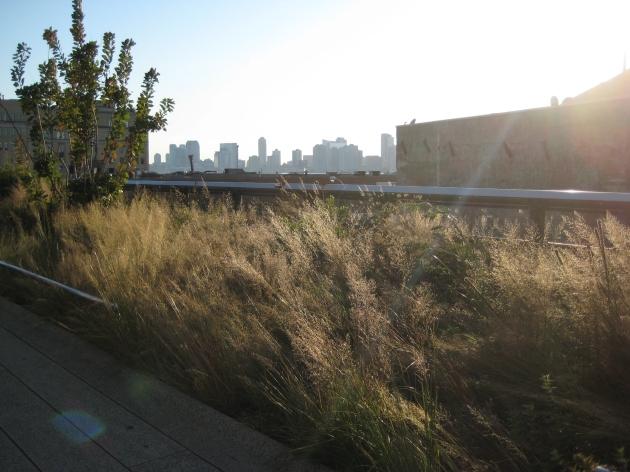 High Line grass views
