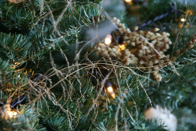 stipa grass fronds as Christmas Deco