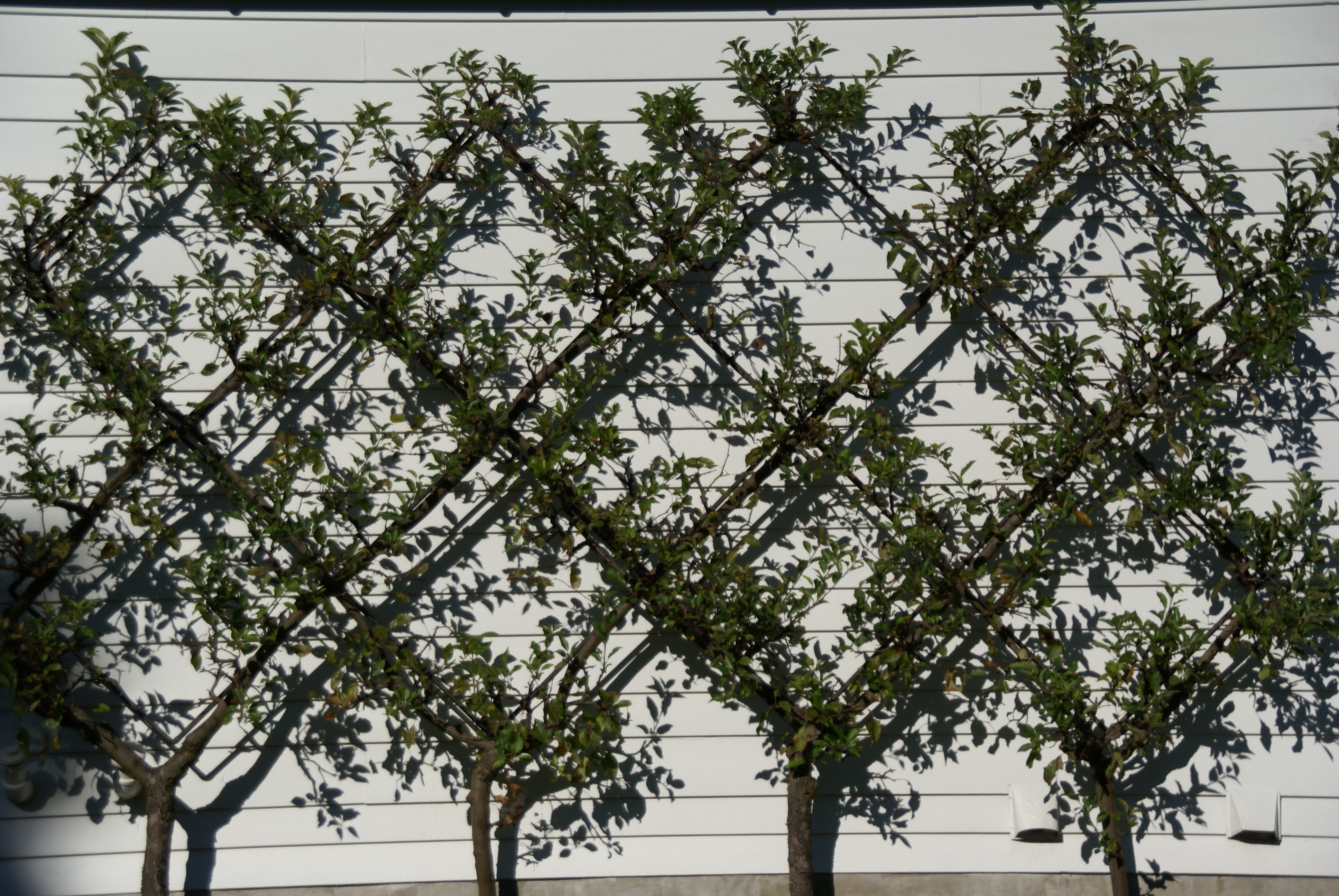 Image Result For Fence For Less