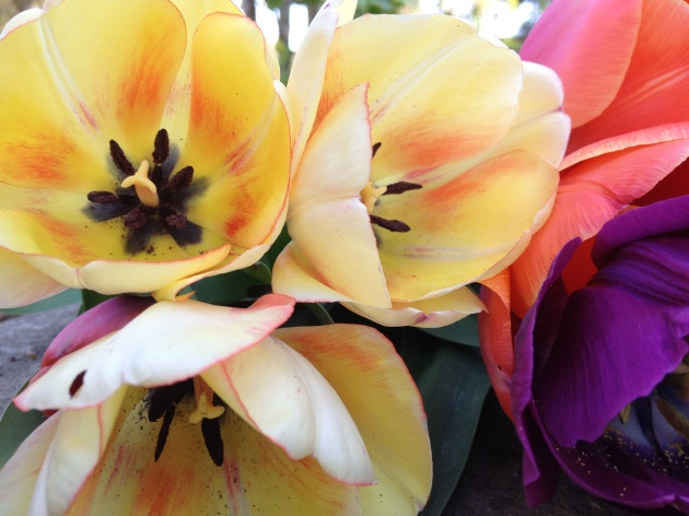 tulip mix with blush