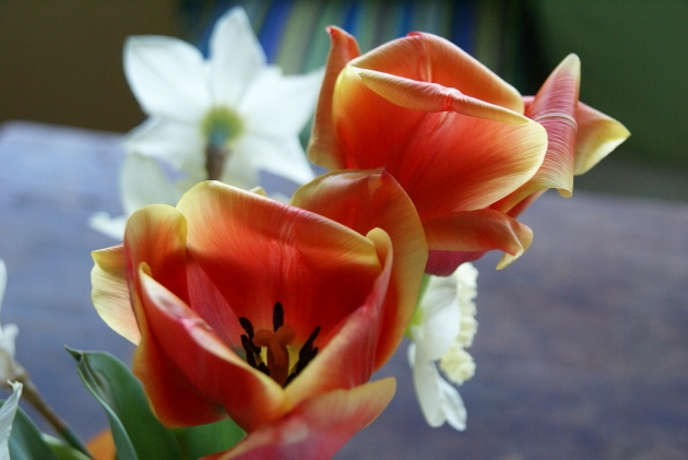 tulip orange pair with mix