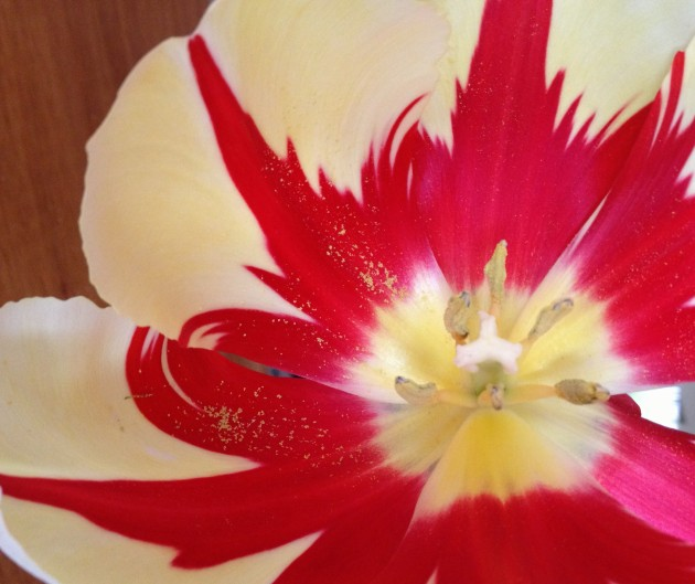 tulip pattern flame closeup