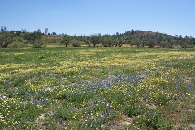 San Luis Obispo County wildflowers
