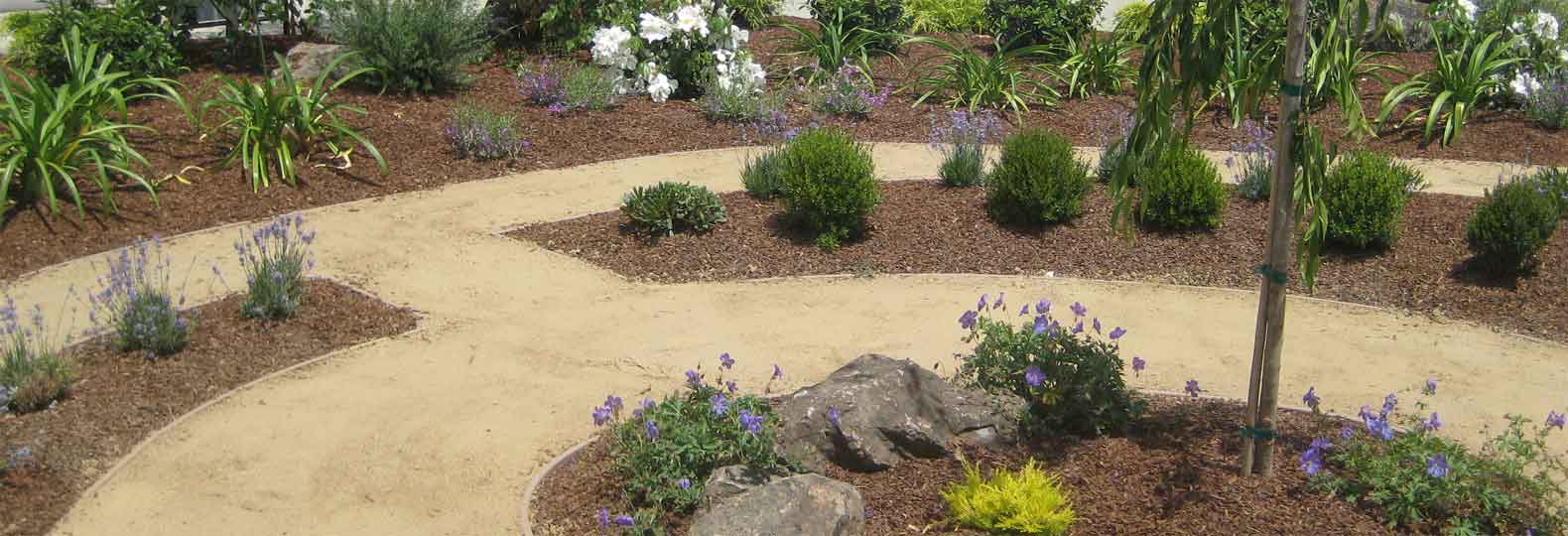 No Lawn In California Landscaping Change Is Good Per Joy