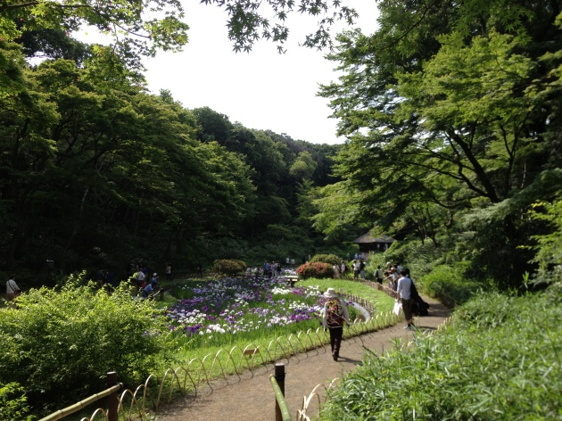 iris river in Tokyo
