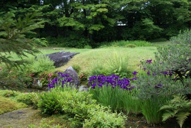 Murinan Villa Garden Iris