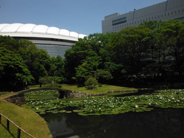 Tokyo Dome Lily Pond