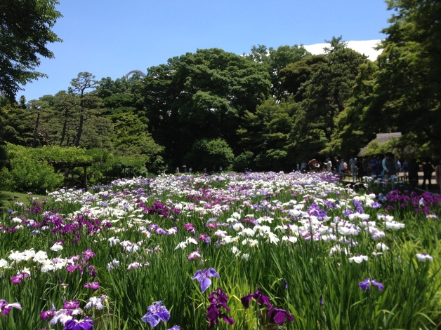 Tokyo dome iris river
