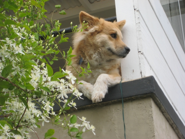 doggy lookout