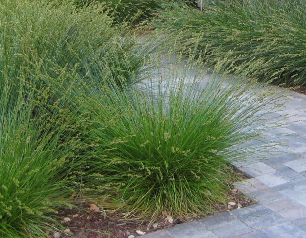 Drought tolerant landscape with Carex and paver entry