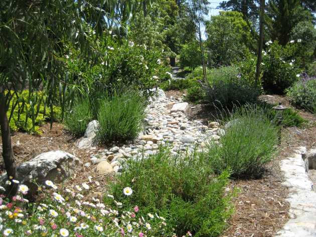 dry stream bed in front yard forest