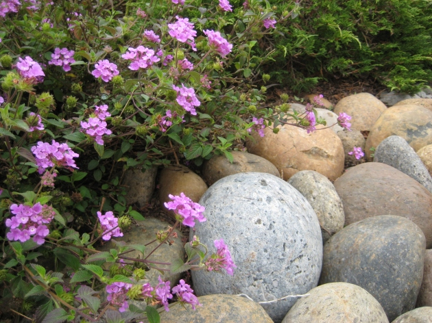 lantana and cobble rock