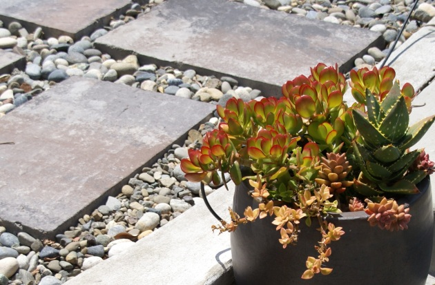 modern permeable hardscape with succulent