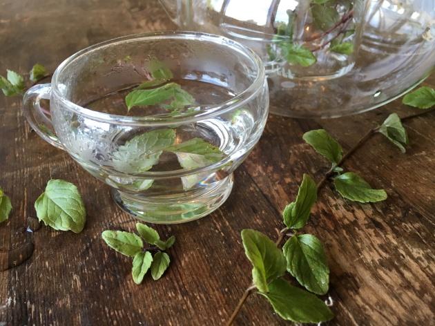 satureja douglasii steep for tea