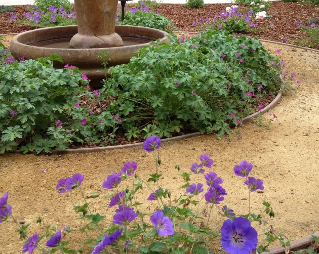 Geranium Blue around fountain