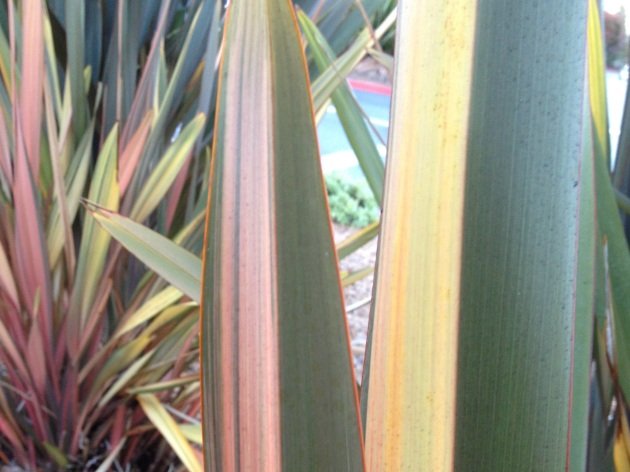 phormium leaves with detail