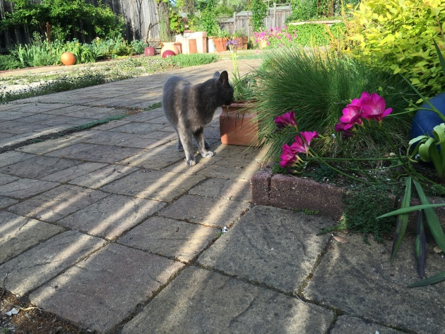 fence shadows stripe cat. perjoy. albright-souza