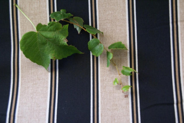black and tan stripe cushions with leaves