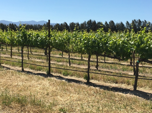 vineyard pattern with lines and shadows