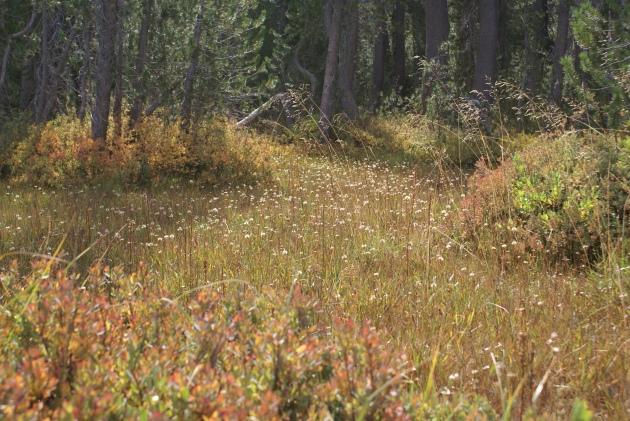 Lassen meadow