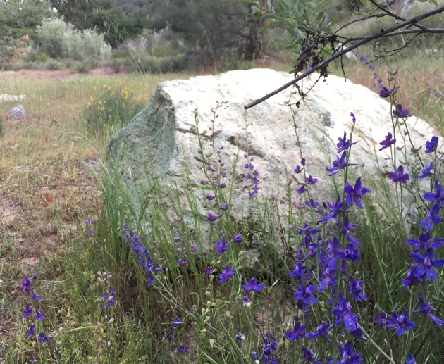 boulder and delphinium