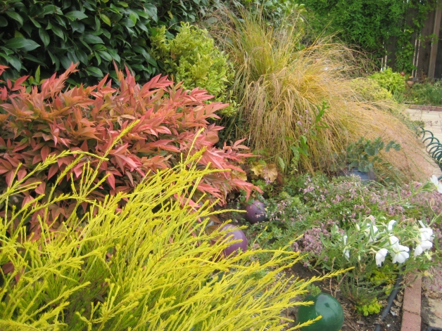 nandina stipa coleonema fall colors
